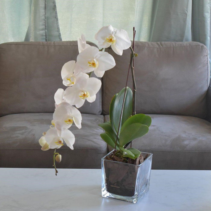 Orchid and Plants